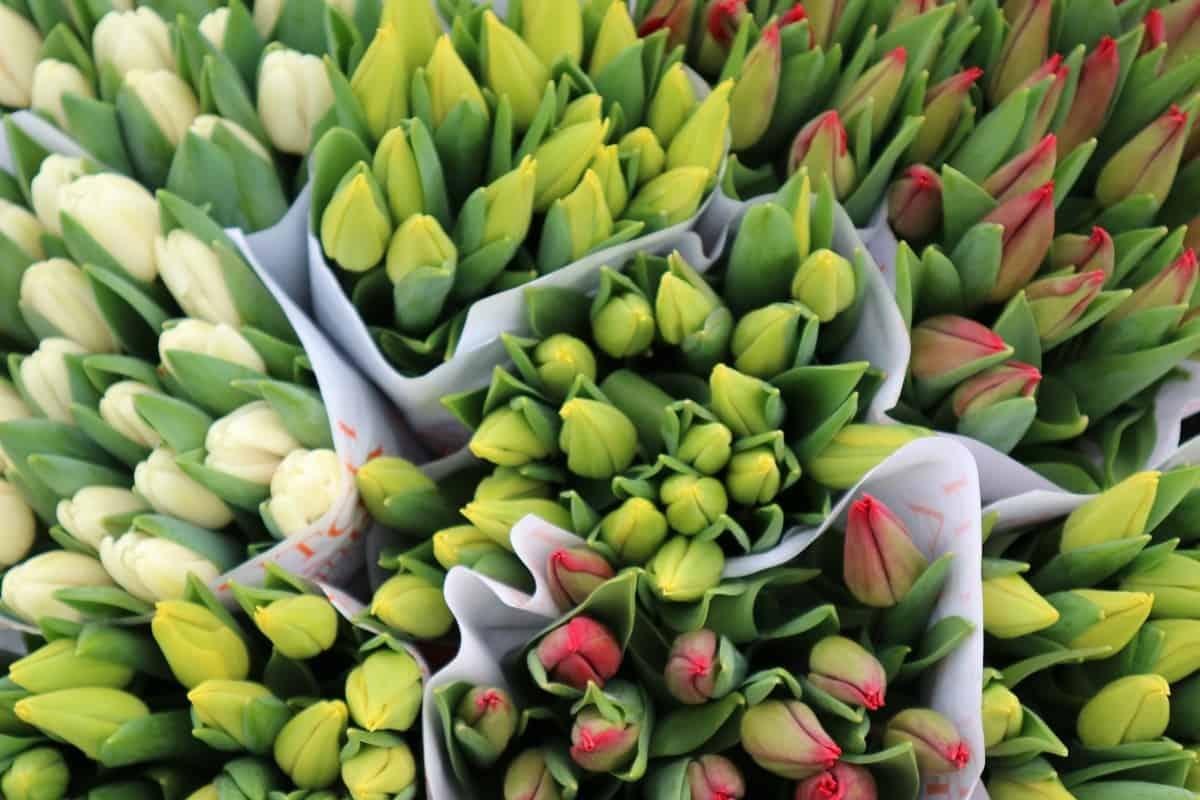 Haal het voorjaar in huis met tulpen!