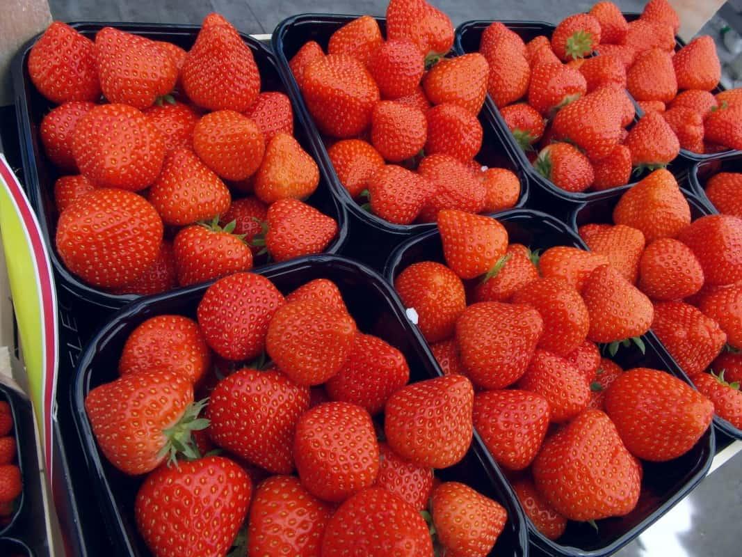 Aardbeien seizoen voorbij
