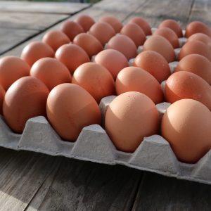 ADOPTIE 2 KIPPEN: 260 eieren (30 cent per ei)
